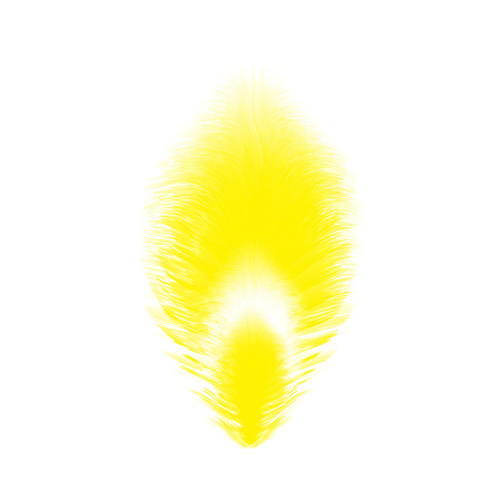 one feather bright color illustration