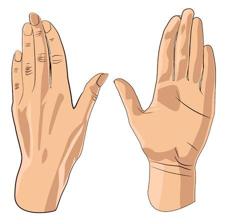 mains ouvertes isolés sur blanc. illustration sur fond blanc