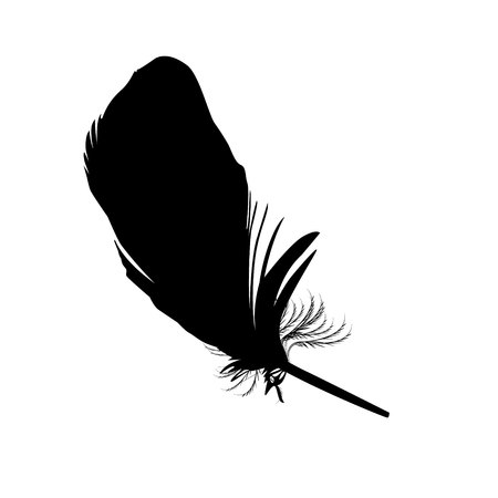 Black delicate feather Illustration
