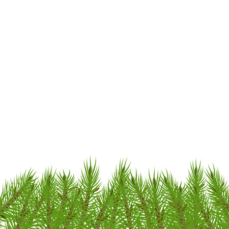 Branches spruce underneath Green lush spruce or pine branch. Illustration