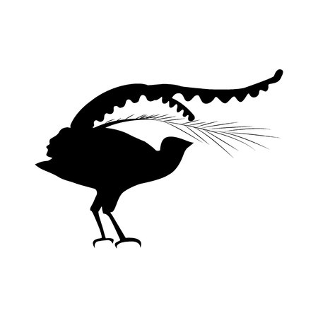 Lyrebird, or bird-lira silhouette of an Australian animal.