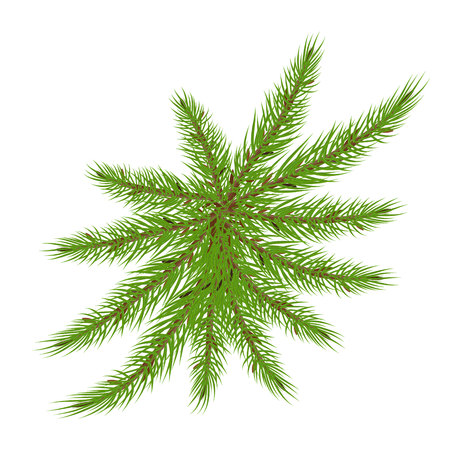 spruce branches in the form of a palm tree