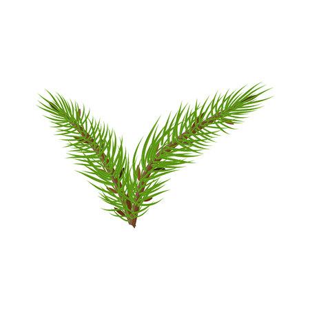 spruce branches check mark Иллюстрация