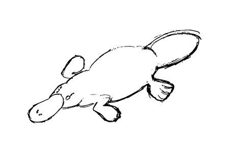 Platypus illustration, drawing, engraving,