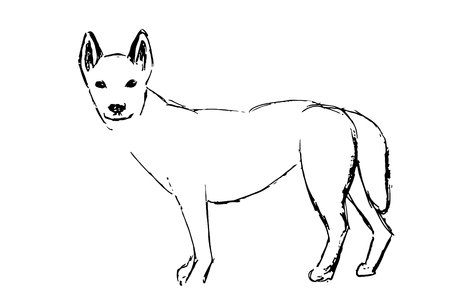 Dingo or Australian Dingo or Canis lupus dingo, vintage engraving. Illustration