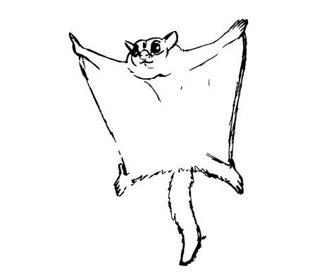 Silhouette of Sugar marsupial fly, or sugar flying posum, or dwarf marsupial fly, or short-flying flying squirrel