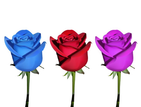 set of roses. three roses of different colors (blue, red and pink) Illustration
