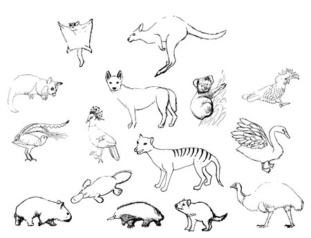 set of sketches of animals in Australia black line