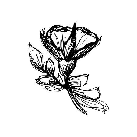 flower sketche of black color. Drawing vector graphics with floral pattern for design. Floral flower natural design. Graphic, sketch drawing. Vectores