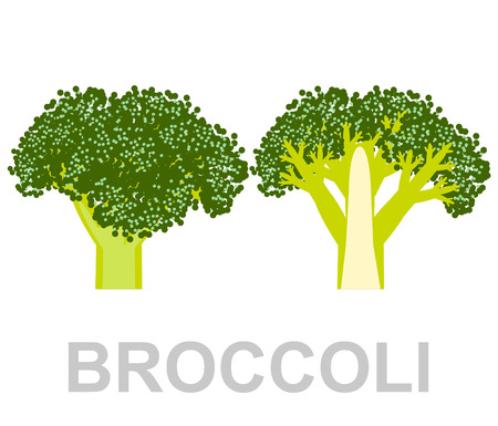icon Broccoli whole and in section