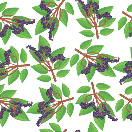 pattern with elderberry Illustration