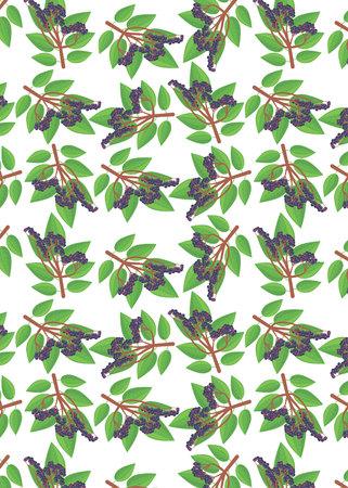 pattern with elderberry Stok Fotoğraf