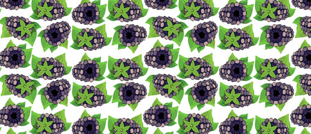 pattern with blackberry BERRIES. vector illustration