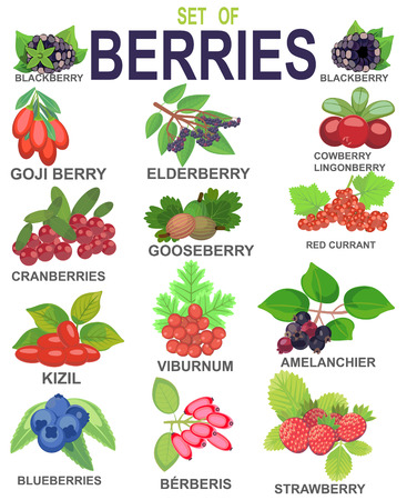 SET OF BERRIES Stock Vector - 115495451