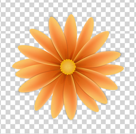 simple flower of orange colors on a transparent background