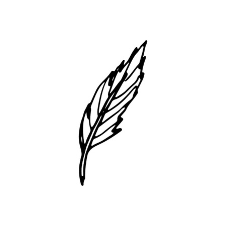 Hand drawn doodle feather.Perfect for invitation, greeting card, coloring book, textile print.