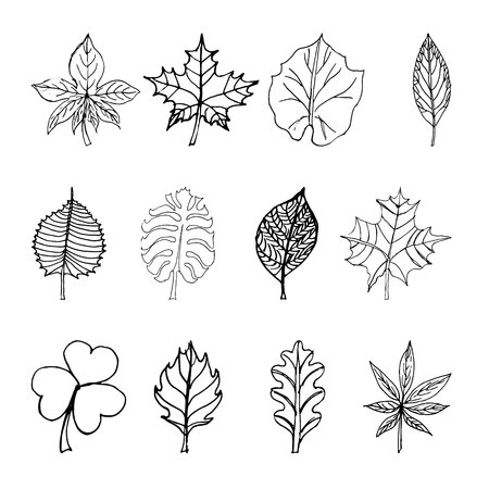 set of sketches with leaves on white background