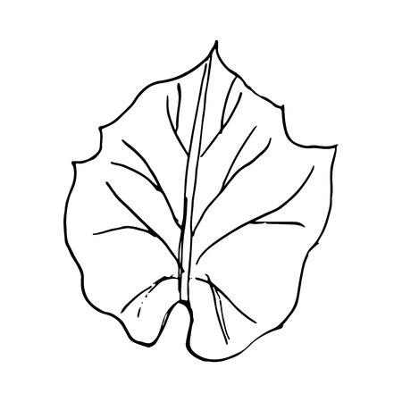Doodle Leave Sketch line illustration on white background