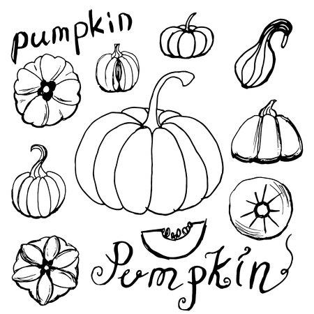 Set of hand draw pumpkins. Autumn holidays.