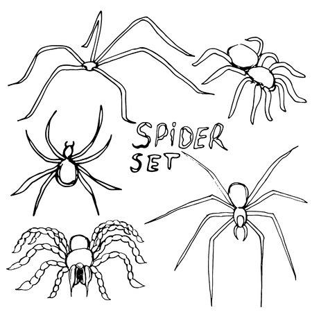 Set of silhouettes of spiders. Vector illustration