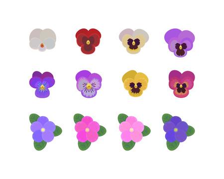 impostare gemme di colore diverso Pansy flower. Collezione di fiori primaverili. vista dall'alto Vettoriali