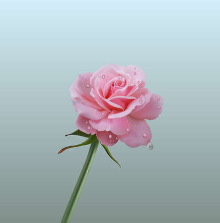 Realistic pink rose on white 免版税图像