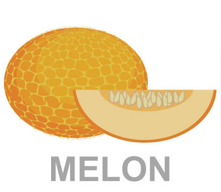 Melon icon entirely and in a cut 矢量图像