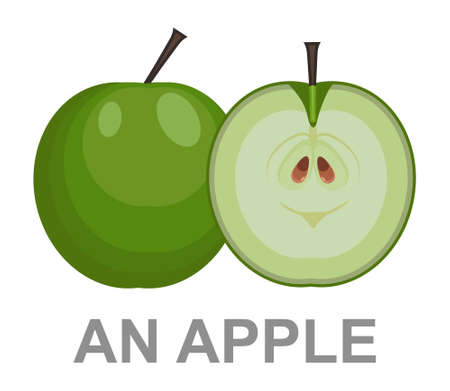 An Apple icon entirely and in a cut. vector apple illustration isolated - healthy fresh fruit symbol, natural sign