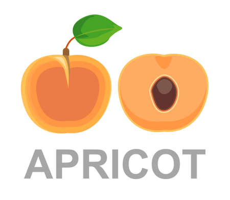Apricot icon entirely and in a cut. ripe apricots on a white background