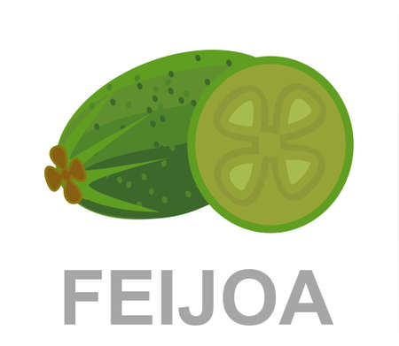 Feijoa icon entirely and in a cut
