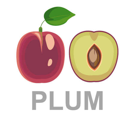 Plum icon entirely and in a cut