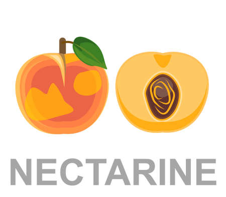 Nectarine icon entirely and in a cut