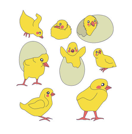 set of cute chickens. little yellow chickens in different poses 矢量图像