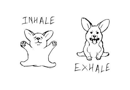 Corgi puppy practicing yoga cartoon. Dog vector illustration isolated on white background. 矢量图像