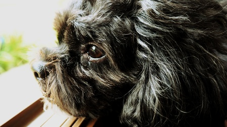 eye: Dog with sad eye Stock Photo