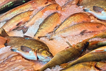 city fish market: Freshwater fish in the central market of the city of Helsinki  Finland