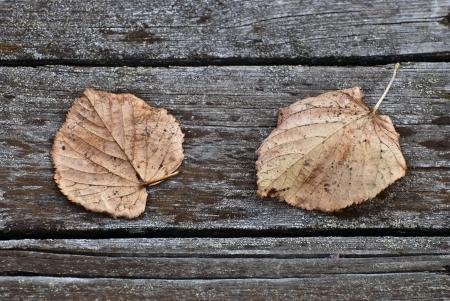 가을은 오래 된 다리의 보드에 누워 나뭇잎
