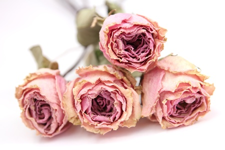 four dried roses with dried leafs isolated on white background