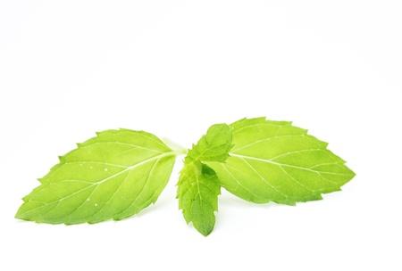 fresh spearmint isolated on white background photo