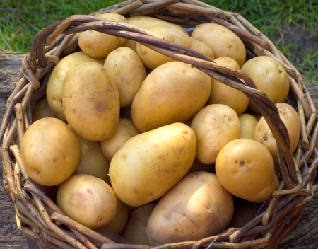 A basket full of fresh potatoes