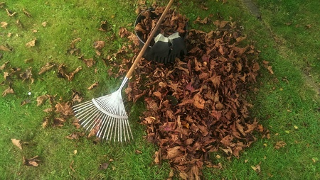 Pile of fall leaves with rake on lawn Stock Photo