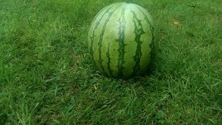 Watermelon on green grass