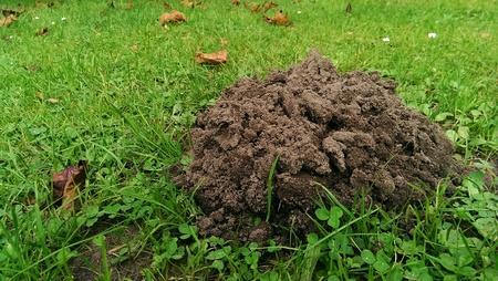 Molehill in garden