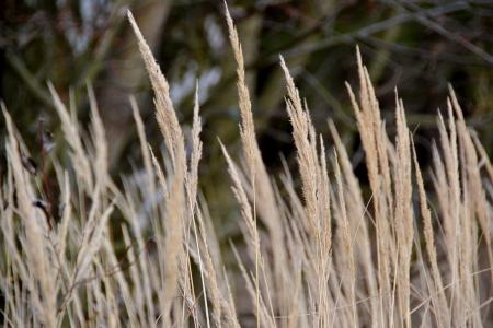 positiv: grass