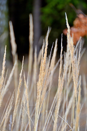 positiv: Grass Stock Photo