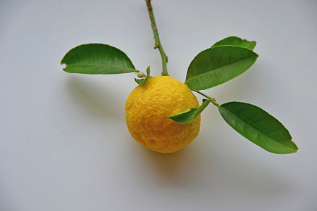 The lemon Stock Photo
