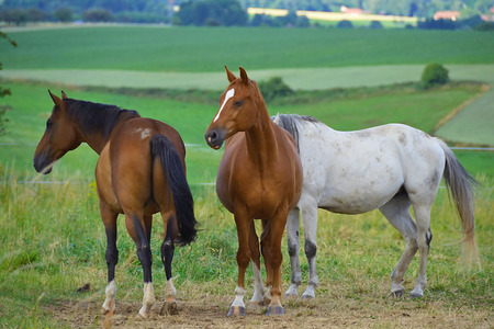 The three horse Stock Photo