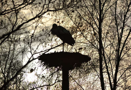 A stork with backlight photo