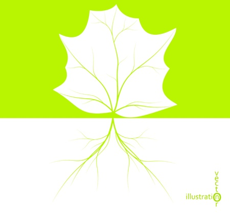 Green leaf with tree roots, eco illustration eps10
