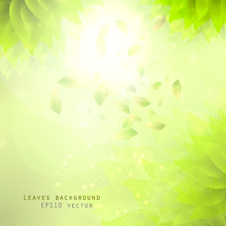 green leaves, eco background eps10 Vector